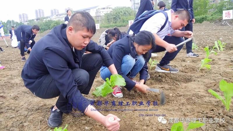 【德育教育】华商农场又见新绿